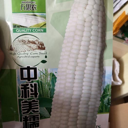 河南省鄭州市二七區 糯玉米種子