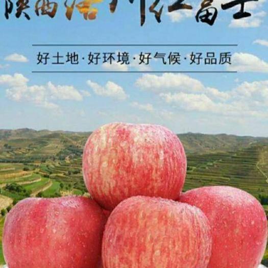 陕西省延安市洛川县 正宗洛川苹果 农户自家种植