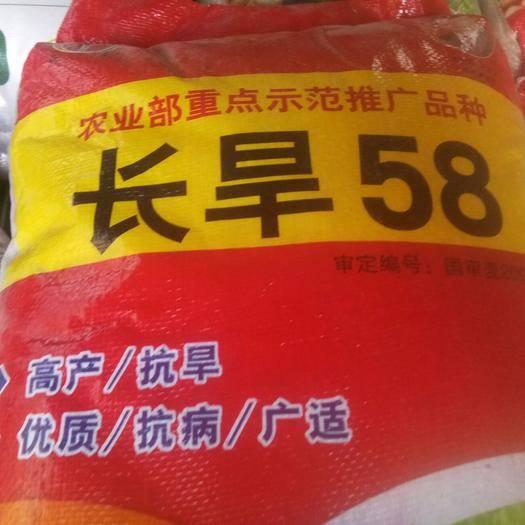 河南省鄭州市惠濟區 國審長旱58小麥種子