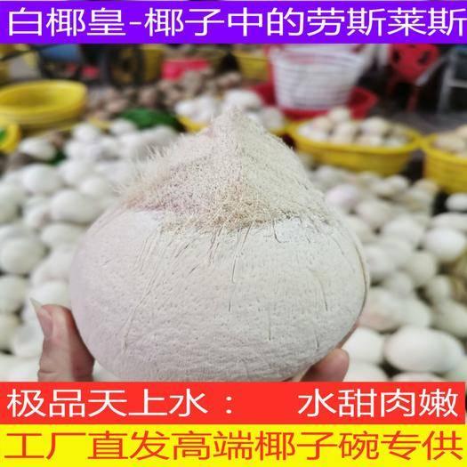 海南省文昌市文昌市 椰子白椰皇:超级椰皇,椰子碗专供,厂家直发