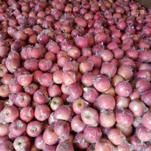山西省运城市平陆县静宁苹果 75mm以上 片红 纸+膜袋