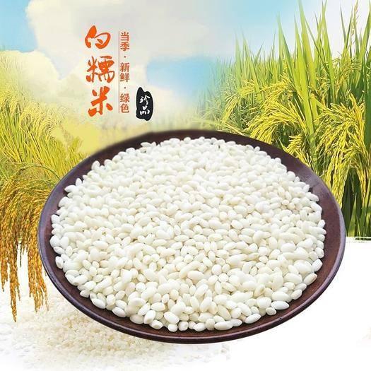 江苏省无锡市锡山区 农家白糯米