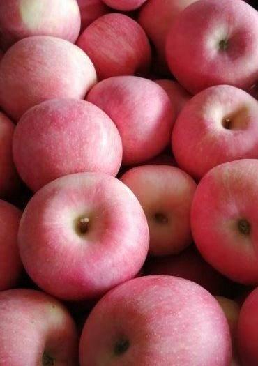 辽宁省大连市瓦房店市红富士苹果 优质全红富士,各种规格,应有尽有