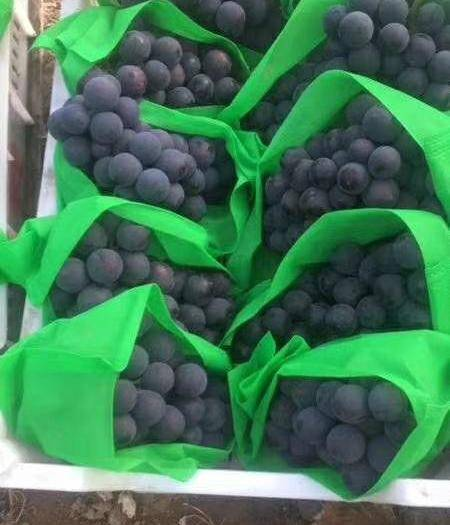 甘肃省兰州市榆中县红富士苹果 十斤装精品东北巨峰大量现货