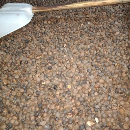 江西省萍乡市安源区油茶籽 出油率高,水份低。
