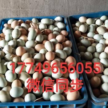 绿壳鸡蛋 420枚480枚都可以。吃的玉米.南瓜.虫草,纯天然无公害。