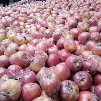 紅富士蘋果 產地代辦,紅富士膜代75起步,個頭大,價格美麗,下樹回家了,
