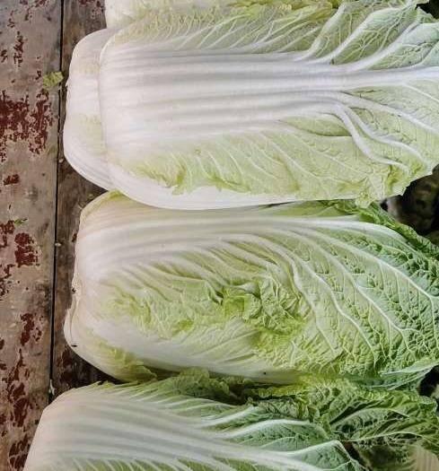 甘肃省兰州市城关区红心大白菜 菜的质量绝对放心无公害蔬菜