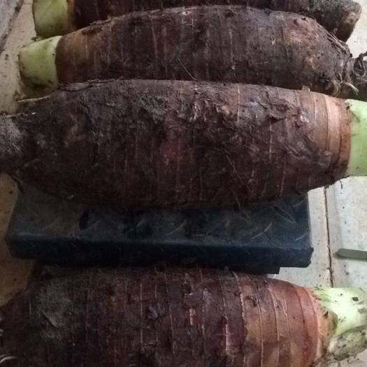 广东省广州市花都区香芋 5cm以上