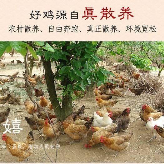 安徽省阜阳市太和县 新鲜三黄鸡现杀公鸡母鸡散养童子鸡冷冻冰鲜