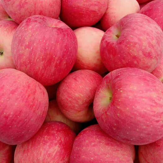 湖北省武漢市蔡甸區 紅富士蘋果