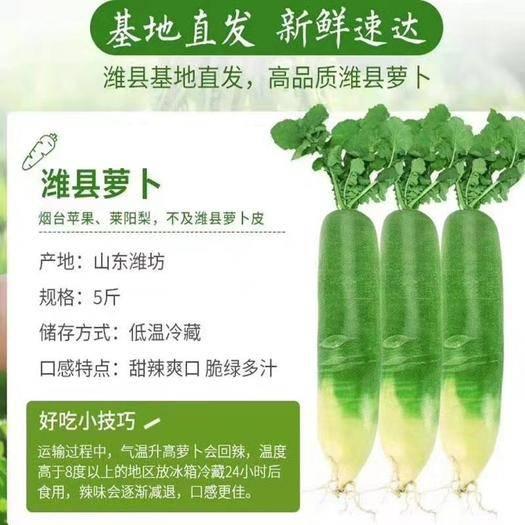 山东省潍坊市寿光市 寿光特菜水果萝卜,大量有货,支持一件代发