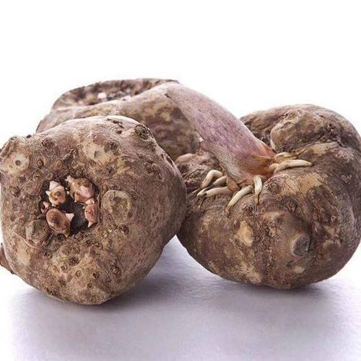 福建省南平市建甌市 農家自種 生魔芋 現挖現賣 魔芋豆腐 一代魔芋種子包成活