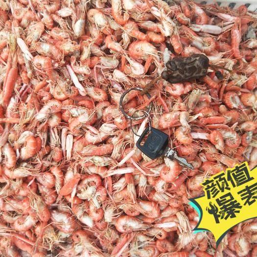 山東省濱州市沾化區紅蝦 野生