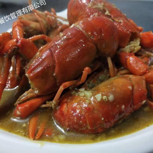 湖南省永州市藍山縣 供應小龍蝦,澳洲淡水小龍蝦