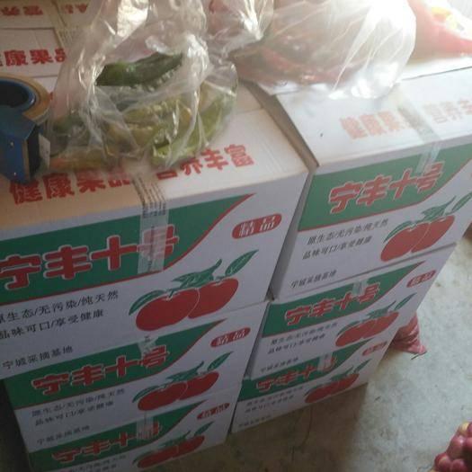 內蒙古自治區赤峰市寧城縣寧豐蘋果 80mm以上 片紅 光果