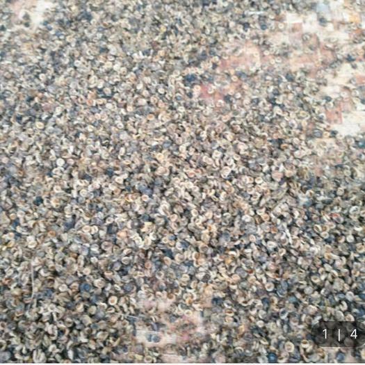 江西省贛州市贛縣區 粉防己種子,生的,干的