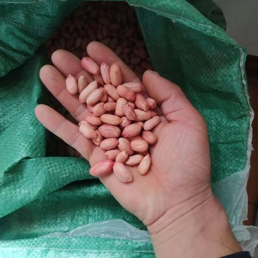山東省濟寧市泗水縣花生種子 花生芽專用種子米