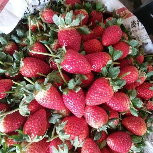 云南省玉溪市红塔区 冬草莓蒙特瑞