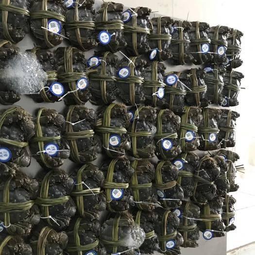 湖北省荊州市洪湖市洪湖大閘蟹 綁好的單只螃蟹,方便送餐廳發禮盒,送領導朋友哦