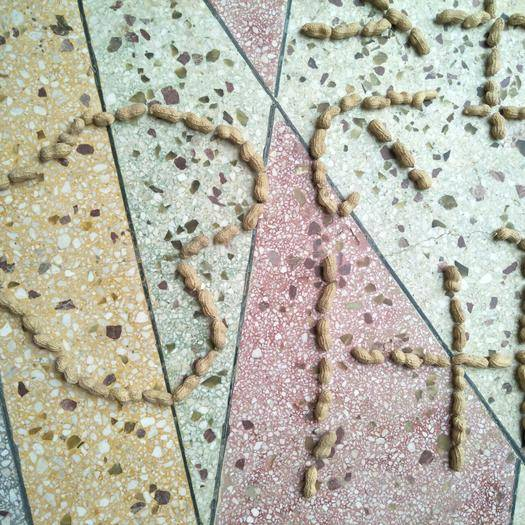 河南省開封市通許縣 河南最大的優質花生基地,色澤鮮艷,籽大粒圓適合炒制及油品加工