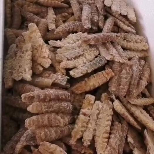 山東省威海市乳山市蝦爬子 皮皮蝦肉,各種規格都有,也可以按照老板的要求訂做呢!