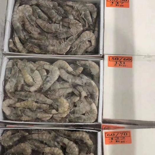 江蘇省連云港市贛榆區 大蝦,南美白對蝦
