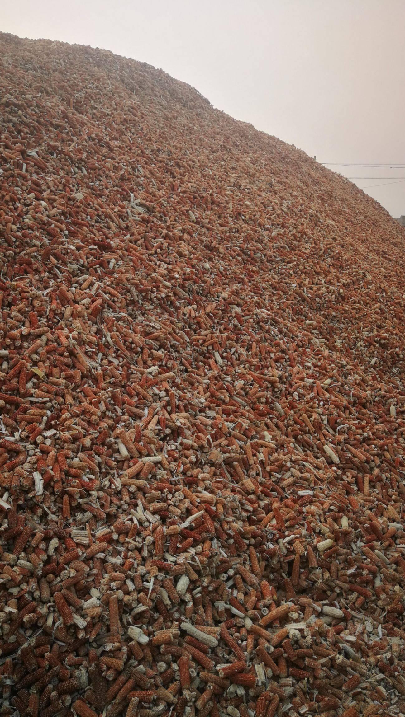大量出售玉米芯.顆粒及壓塊上車價660