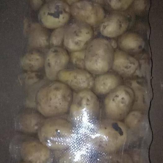 內蒙古自治區呼倫貝爾市牙克石市興佳2號種薯 一級原種