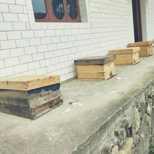 江西省上饒市弋陽縣 正宗高山蜂純天然采花百花蜜土蜂蜜