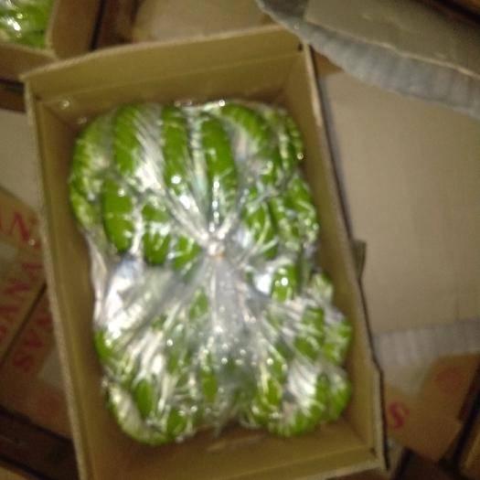 云南省文山壯族苗族自治州麻栗坡縣云南紅河香蕉 八成熟