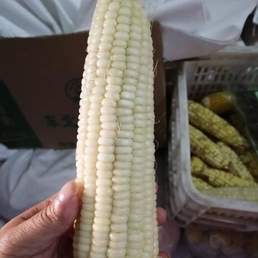 黑龍江省牡丹江市海林市甜糯玉米 速凍東北粘糯玉米
