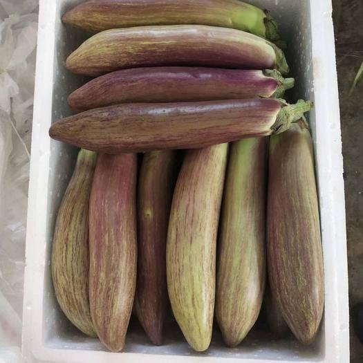 云南省西雙版納傣族自治州景洪市 冰川茄  精品貨