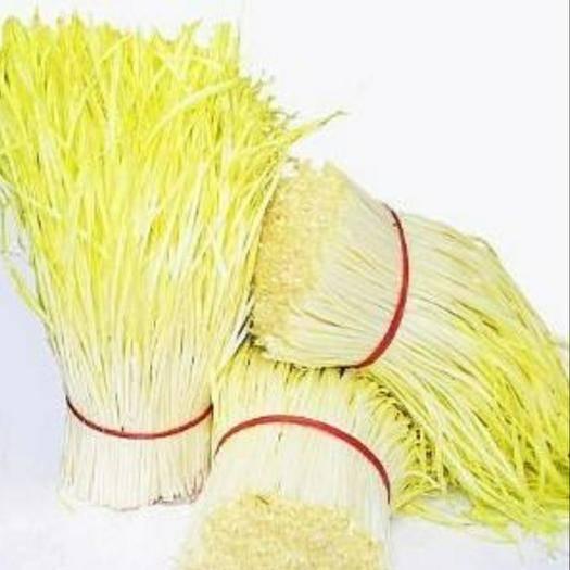 浙江省紹興市上虞區 自己家里種的韭黃,每天可以供應500斤以上
