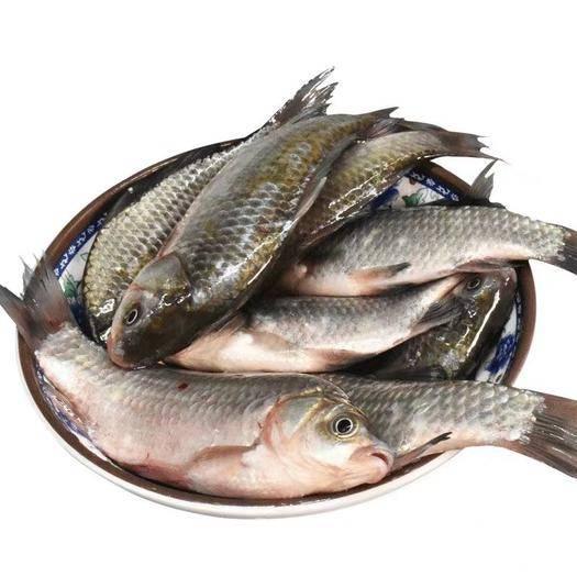 山東省濟寧市任城區 生鮮鯽魚,3斤裝,一箱4—6條
