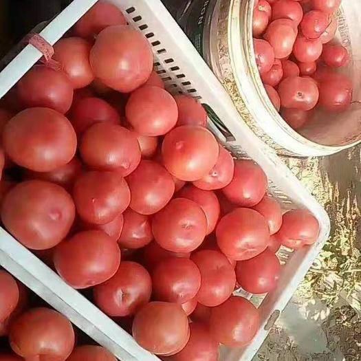 遼寧省朝陽市凌源市 硬粉西紅柿大量優惠上市超市專供