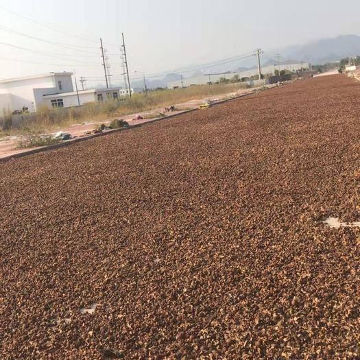 湖南省永州市寧遠縣 新上市的茶籽,出油率高保證出油率,量大歡迎咨詢與訂購誠信雙贏