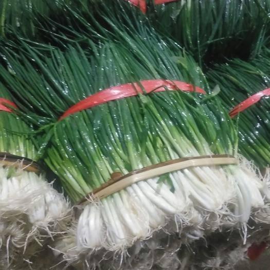 云南省紅河哈尼族彝族自治州瀘西縣 小蔥 黑蔥 分蔥 粗管 細管