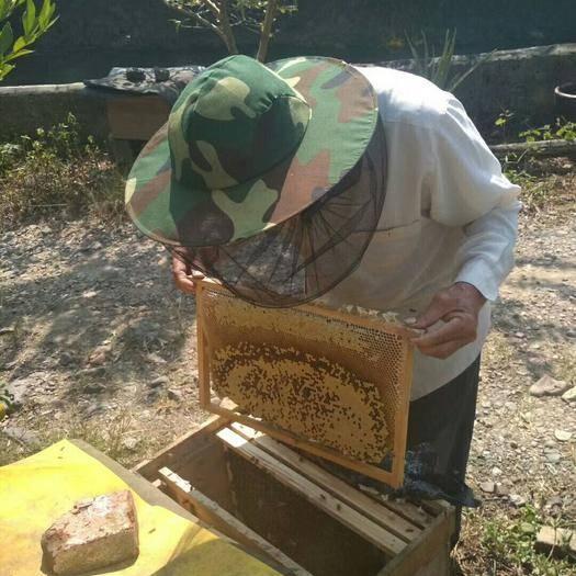 廣西壯族自治區貴港市平南縣 大量供應中蜂和土蜂蜜