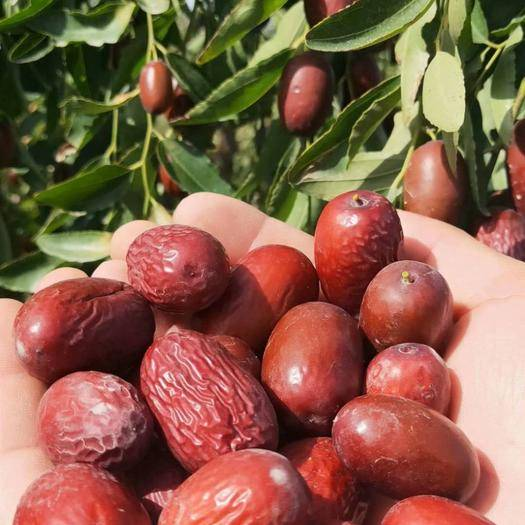 新疆維吾爾自治區阿克蘇地區阿克蘇市新疆紅棗 新疆阿克蘇新鮮灰棗