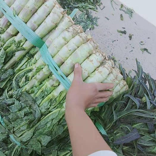 廣西壯族自治區賀州市富川瑤族自治縣 萵筍萵筍大量貨,有老板需要請聯系我