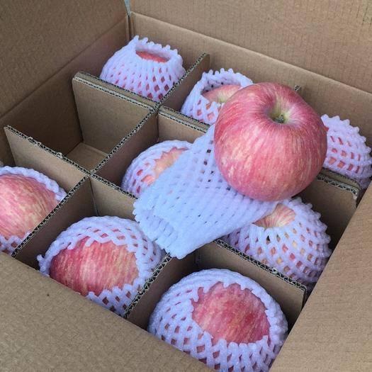 陜西省延安市洛川縣洛川蘋果 洛川紅富士包郵    不甜包賠  壞果包賠