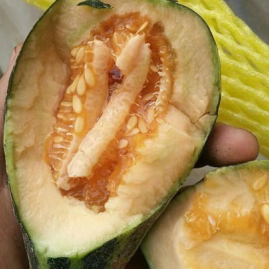 山東省濰坊市壽光市 常年大量供應羊角密博洋系列甜瓜
