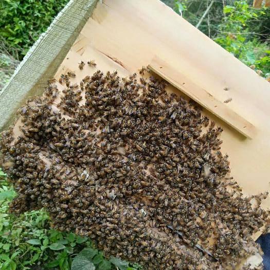 江西省贛州市南康區 農家蜂蜜