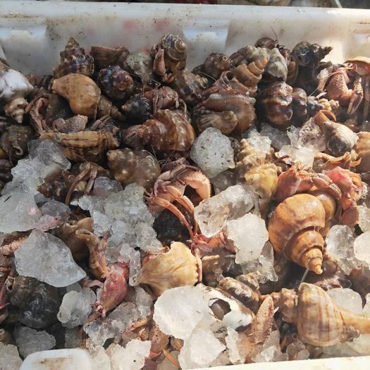 山東省威海市榮成市 海螺香螺