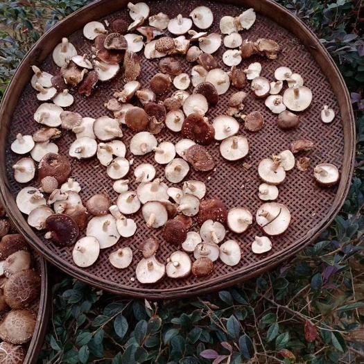 廣西壯族自治區桂林市靈川縣 大山里原木純生態香菇