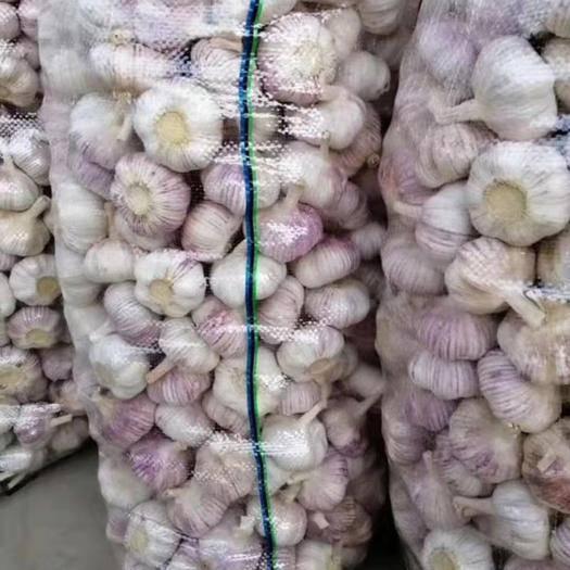 廣西壯族自治區南寧市西鄉塘區 紫皮大蒜干大蒜5.0-6
