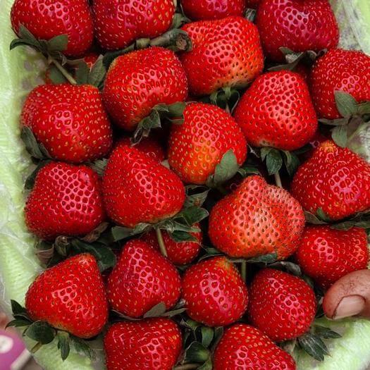 云南省普洱市思茅區 新鮮草莓