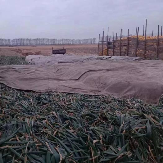 吉林省長春市德惠市 零售,批發長白大蔥