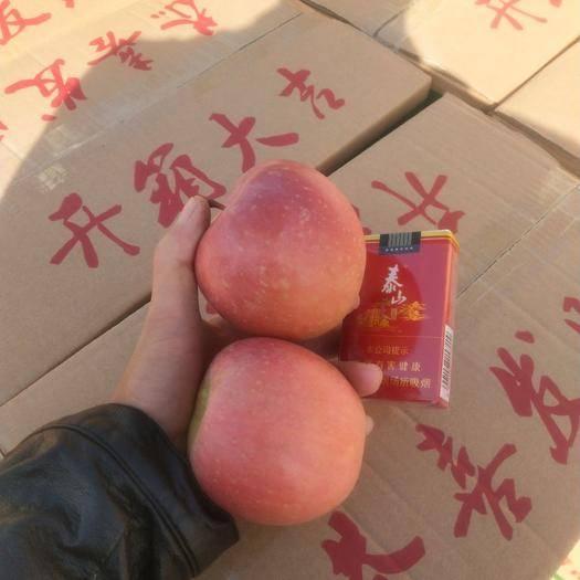 河南省商丘市虞城縣冰糖心蘋果 精品80果無疤無傷無次果
